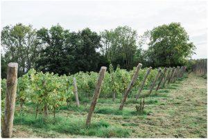 Vineyard at Yoghurt Rooms wedding venue